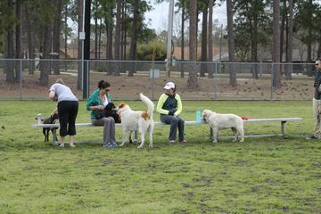 Dog Friendly Activities In Biloxi Ms Bringfido