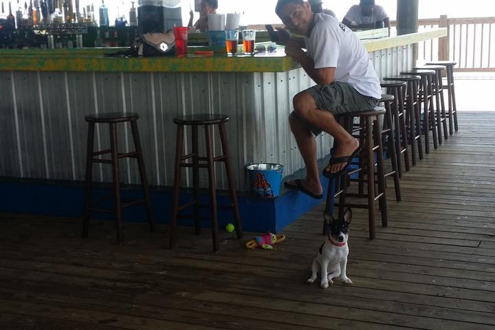 Pet Friendly Shaggy's Biloxi Beach