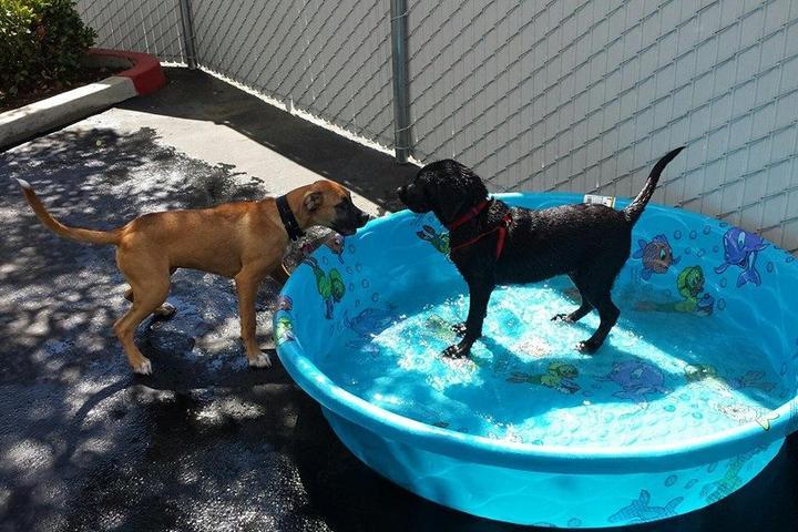 Pet Friendly Diggity Dog Playhouse