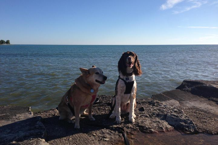 Dog Owner's Guide to Sheboygan, WI