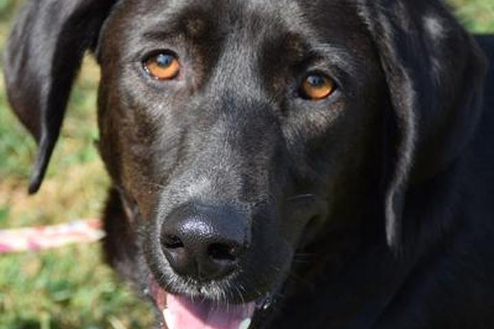 Pet Friendly Pampered Pets & Dog Walking, LLC