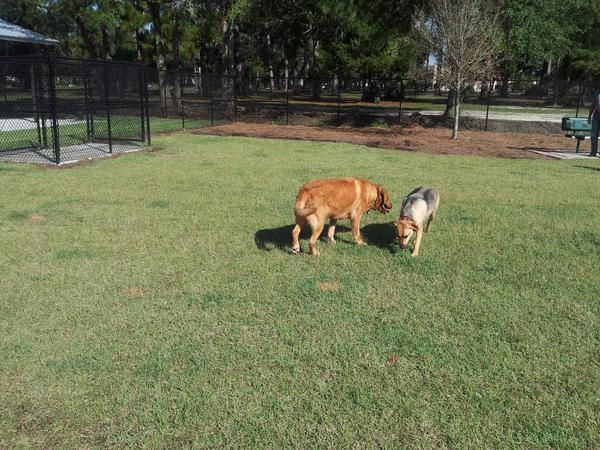 Al Helms Dog Park