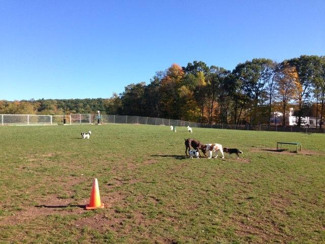 Cheshire Dog Park