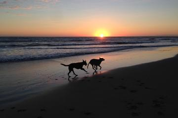 Pet Friendly San Onofre State Beach