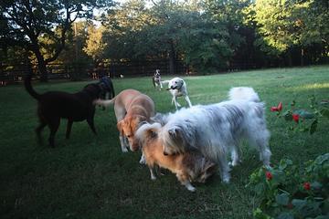Pet Friendly Pawz-n-Pads Pet Sitting & Dogwalking