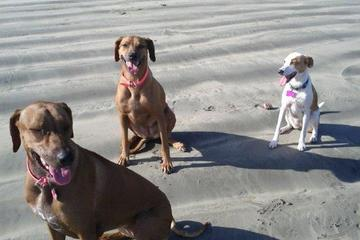 Pet Friendly Build A Bond Dog Services