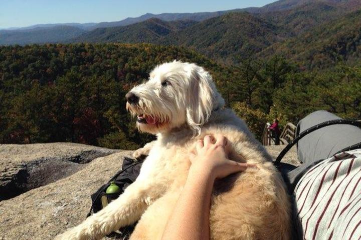 Pet Friendly Stone Mountain Summit Trail