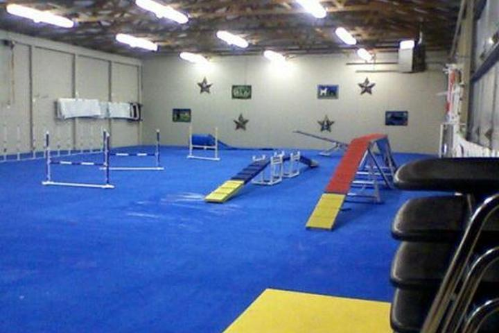 Pet Friendly The Agility Gym