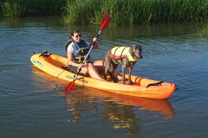 Pet Friendly Tybee Island Jet Ski & Watersports