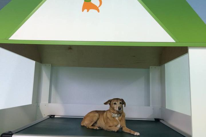 Pet Friendly Citydog! Club