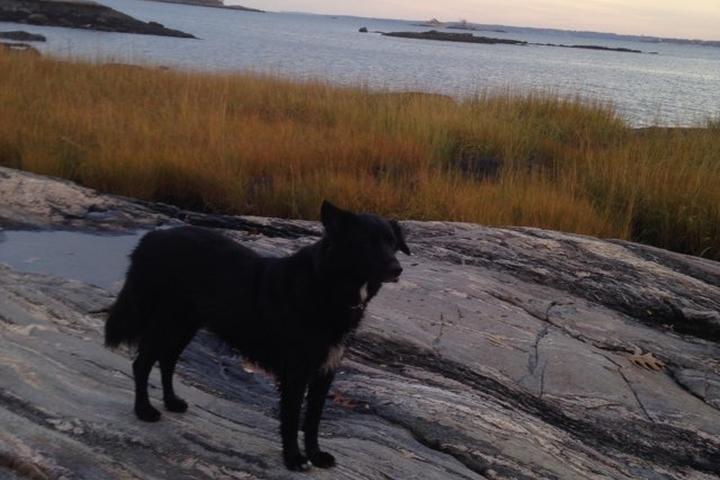 Pet Friendly Hunter Island Trail