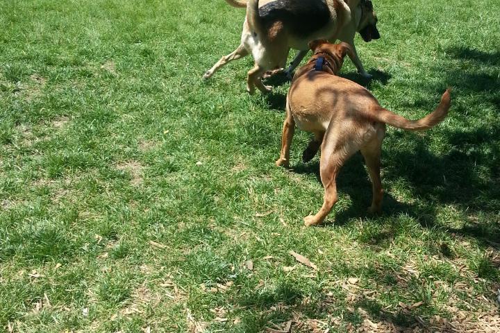 Pet Friendly Hamilton Bark Park