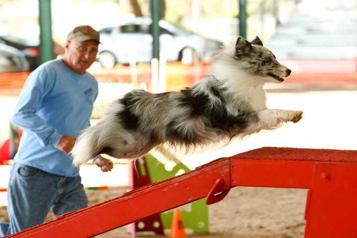 Pet Friendly Don's Good Time Agility