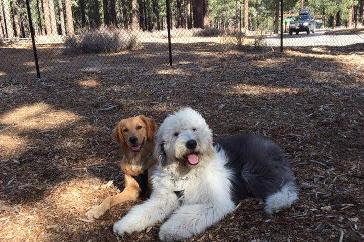 Pet Friendly Bijou Dog Park