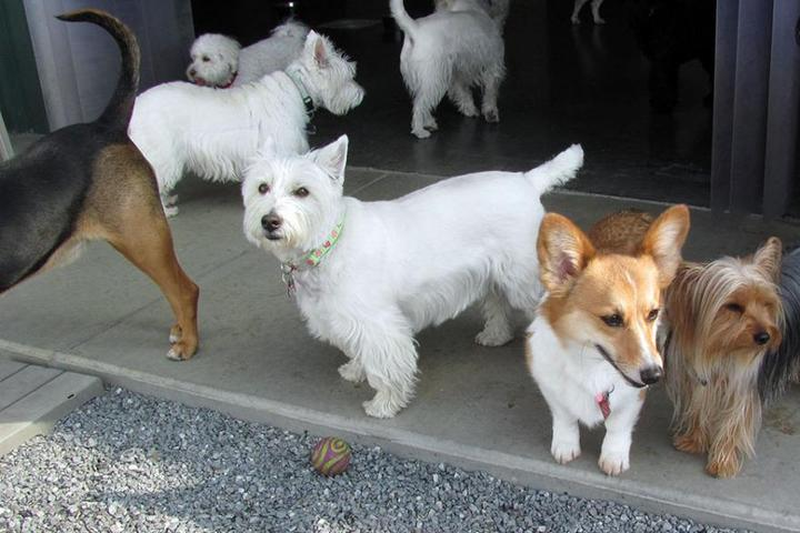 Pet Friendly Happy Tails Country Club