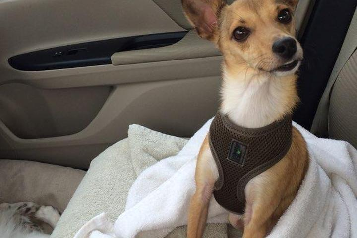 Dog Owner's Guide to Springdale, AR