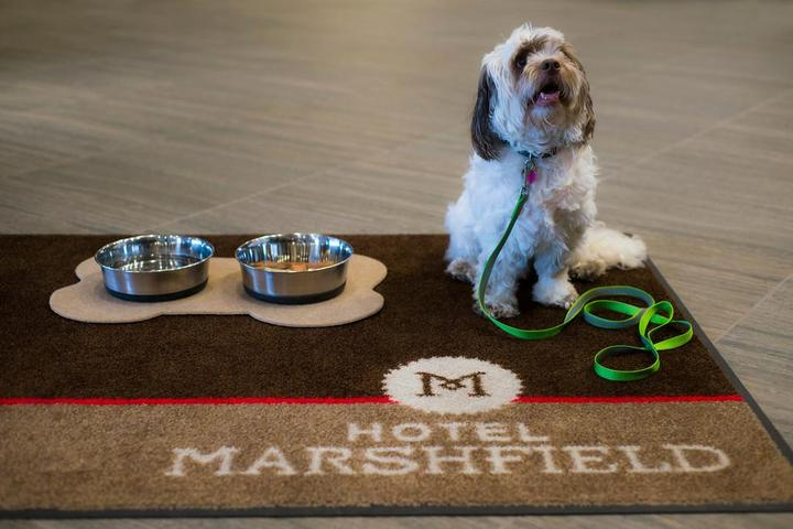 Dog Owner's Guide to Marshfield, WI