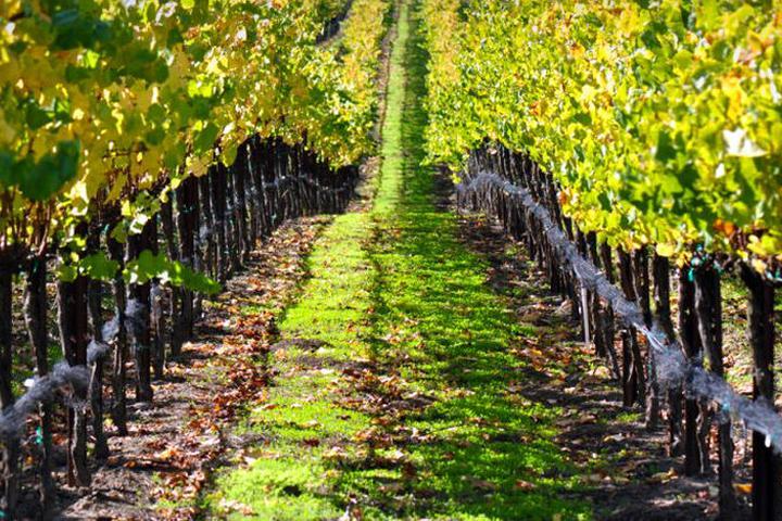 Pet Friendly Santa Barbara Winery