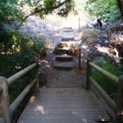 Franklin Canyon Lake Loop & Chaparral Trail