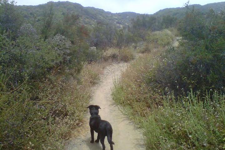 Pet Friendly Caballero Canyon Trail