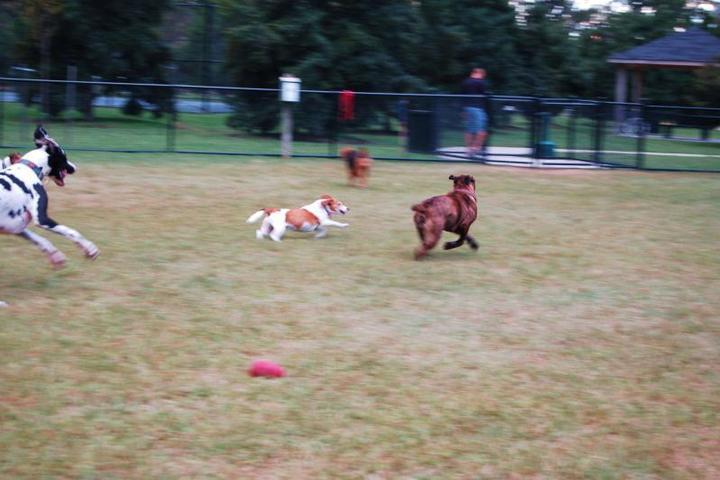 Pet Friendly Woodstock Community Dog Park