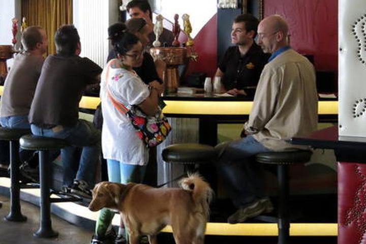 Pet Friendly Angel City Brewery