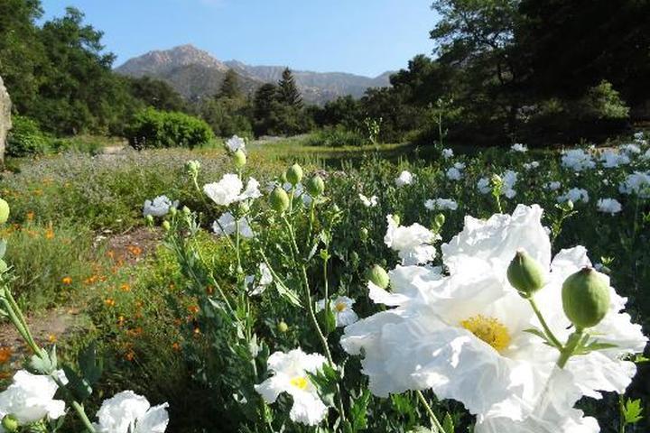 Pet Friendly Santa Barbara Botanical Gardens