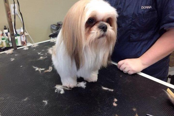 Pet Friendly Pampered Paws Grooming LLC
