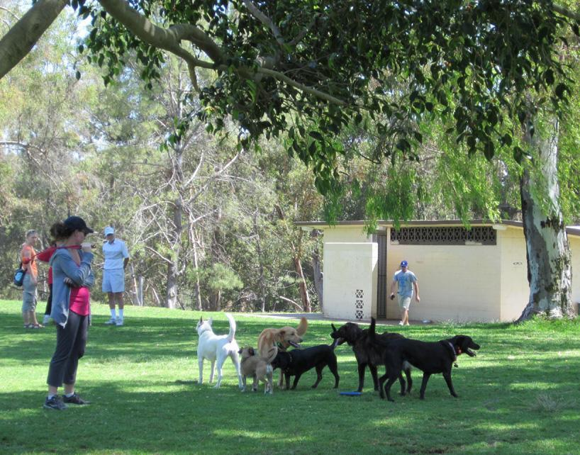 Image result for san diego dog parks