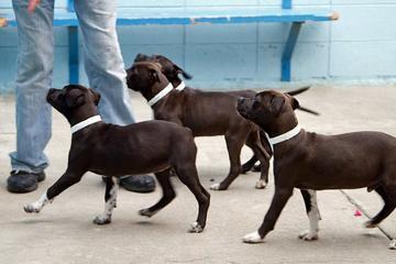 Pet Friendly Sports Basement