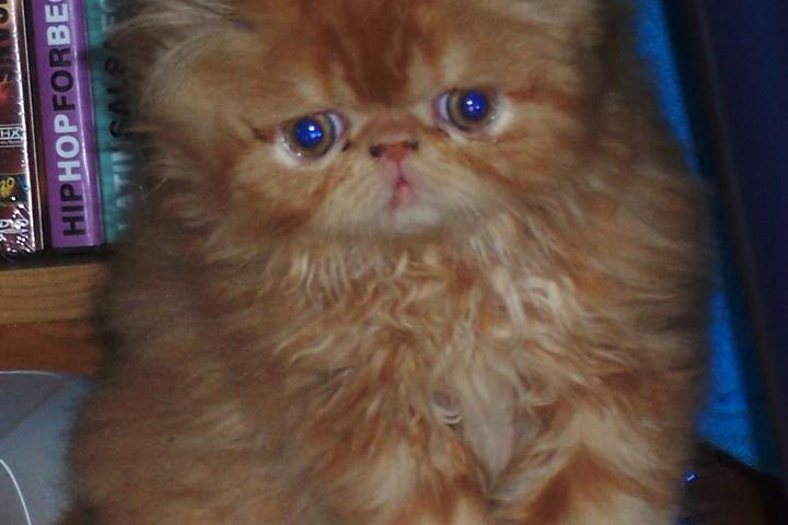 Pet Friendly Heaven Sent Pet Sitter