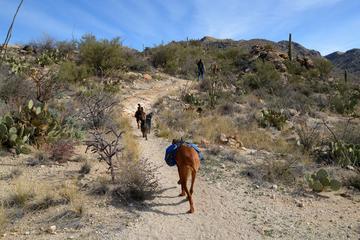 Pet Friendly Agua Caliente Hill Trail