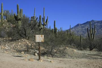 Pet Friendly Catalina State Park