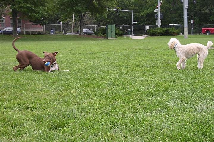 Dog Friendly Activities in Boston, MA - Bring Fido