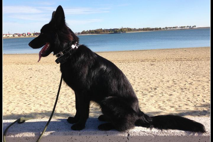 Pet Friendly Castle Island Beach