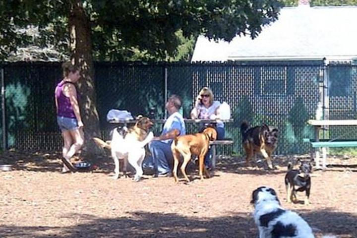 Pet Friendly Medway Off Leash Dog Park
