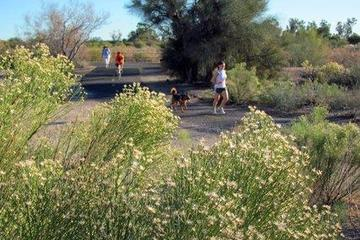 Pet Friendly Rillito River Park Trail