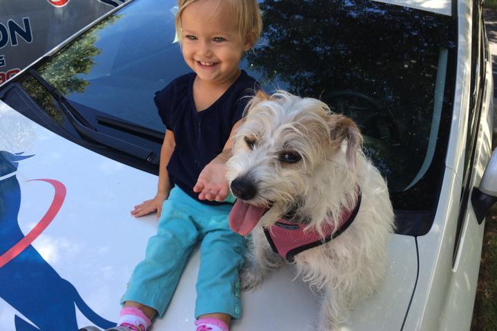 Pet Friendly Attention Dog Training