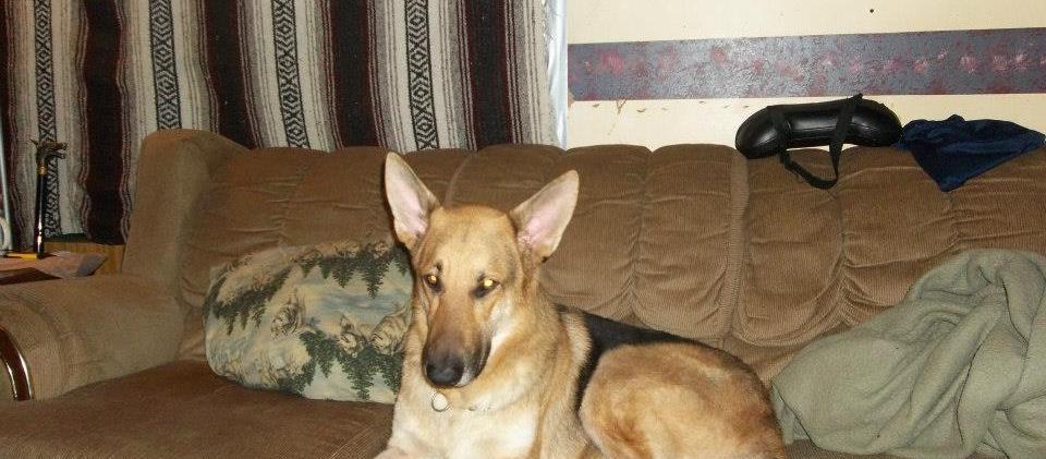 Dog Friendly Hillsborough Nc Bring Fido