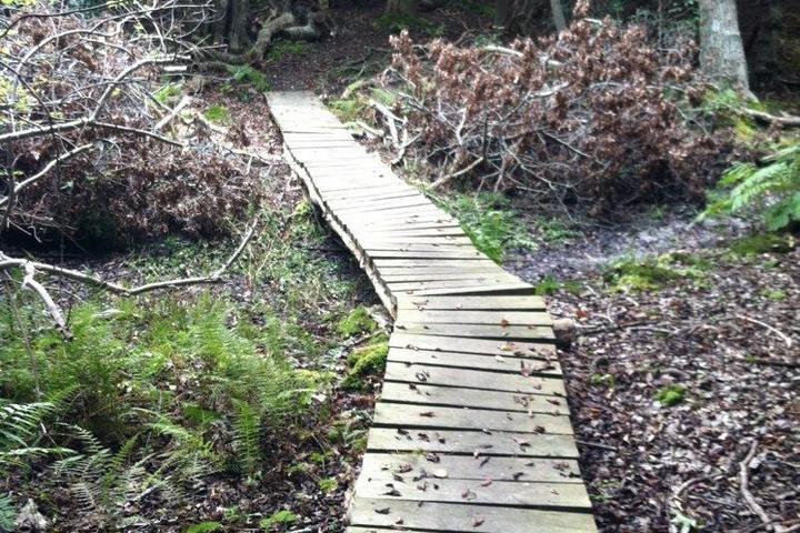 Pet Friendly Point Woods Loop Trail