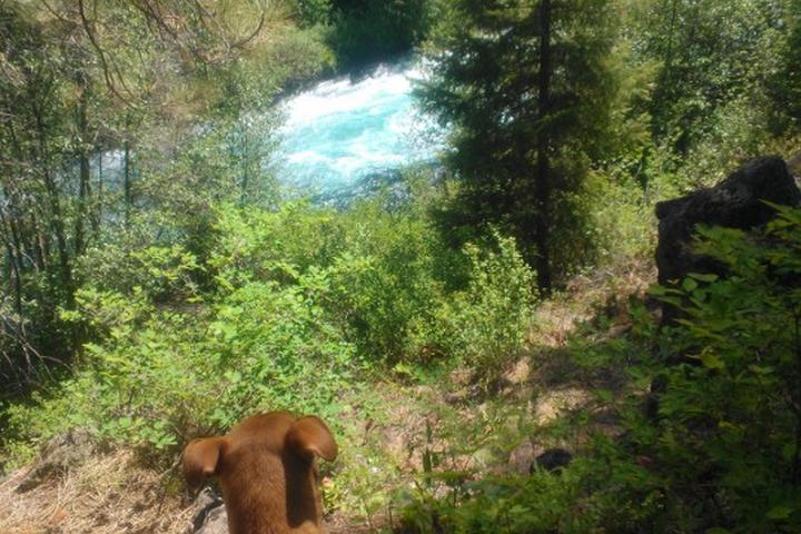 Pet Friendly Metolius River Trail