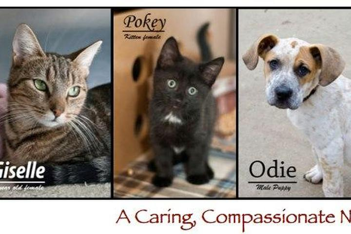 Pet Friendly Animal Rescue League of Southern Rhode Island