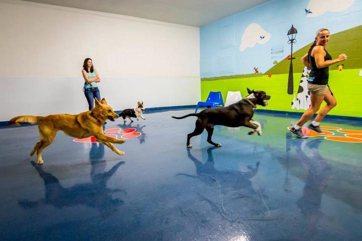 Pet Friendly PetSet Spa South Bay
