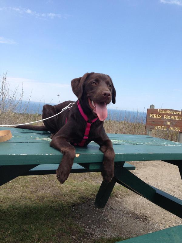Dog Friendly Hotels Mackinac Island