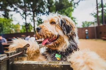 Pet Friendly Banger's Sausage House & Beer Garden
