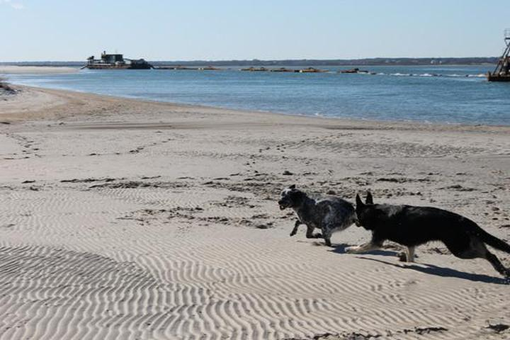Pet Friendly Topsail Island