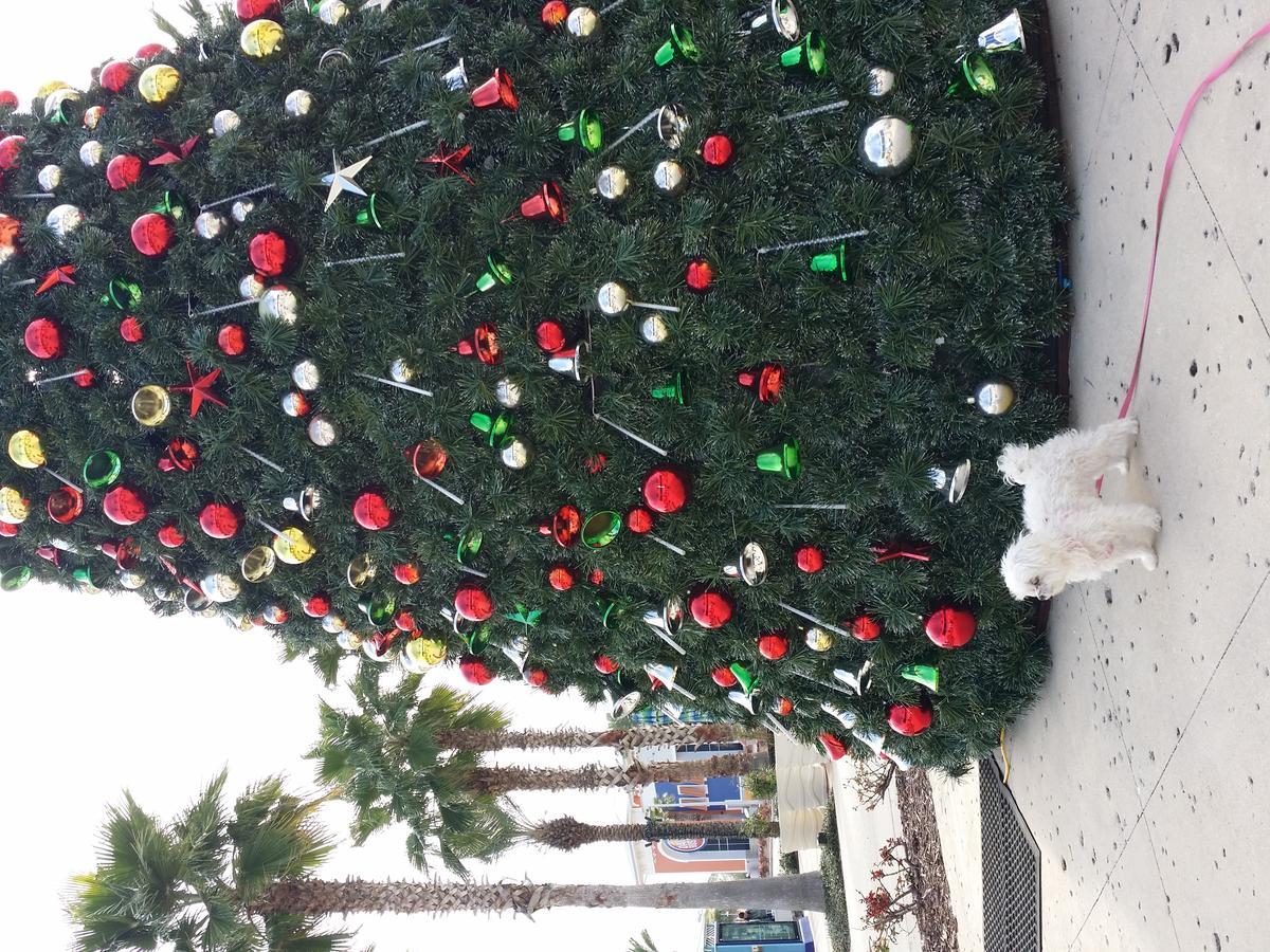 """""Miracle Martini"""" waiting for Santa at Pier Park in P C B Fl,"