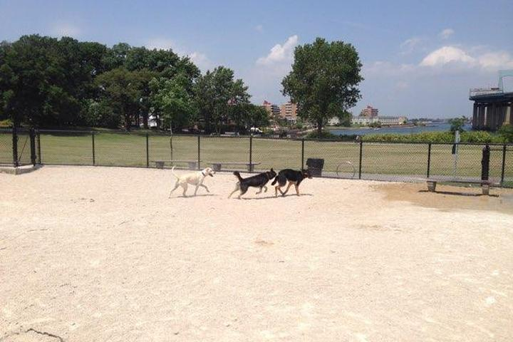 Pet Friendly Little Bay Dog Run