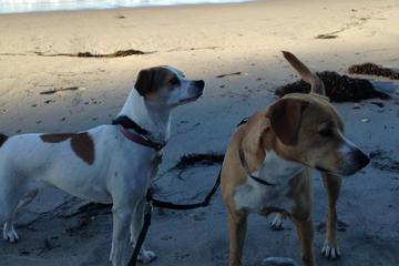 Pet Friendly Rincon Park (County of Santa Barbara)
