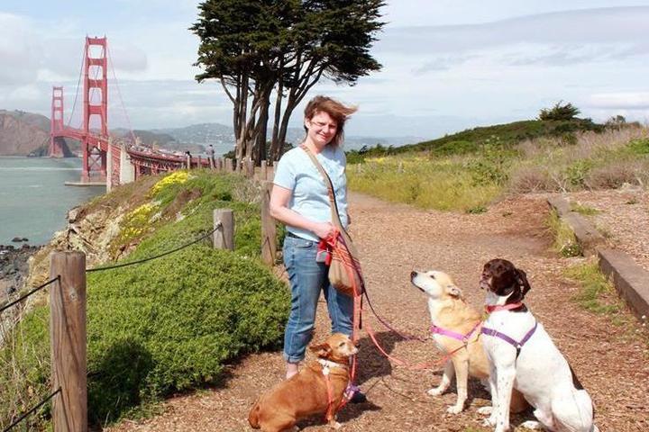Pet Friendly Go Dog Go! Dog Training